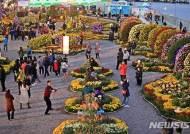 '국화 반, 사람 반' 마산가고파국화축제