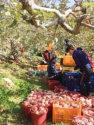 충북 농작물재해보험 가입면적 매년 증가…올해 21.4%↑