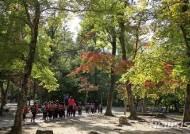 산림청, 11월 국유림 명품숲에 '광릉숲' 선정