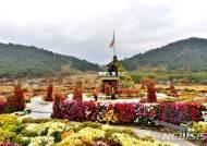 '한반도 첫 수도 고창국화축제', 국화 향기로 관광객 매료