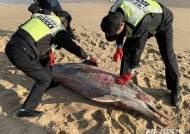 해양동물 수난…강릉서 긁힌 자국 죽은 돌고래 발견돼