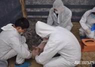 """중국 백두산 인근서 돼지열병 발생…""""한반도 전파 위험""""(종합)"""