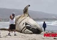 印尼 해변 고래 뱃속서 플라스틱쓰레기 천여점 쏟아져