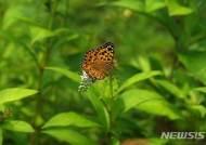 백두대간에 멸종위기종 네발나비 등 나비 138종 산다