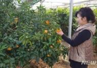 [괴산소식]군, 기후변화 대비 아열대 작물 19종 시험재배 등