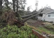 미 워싱턴주 토네이도, 뿌리째 뽑힌 나무
