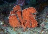 바다의 소나무 '해송' 4종, 보호대상해양생물 지정