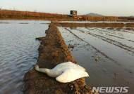 사람이 뿌린 농약에 야생조류 1000마리 목숨 잃었다…겨울철 집중