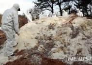 """""""가축 살처분 트라우마 심각…정부가 심리치료 권해야"""""""