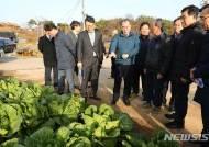 '가격 폭락' 전남 배추 1392t 산지 폐기…시장격리 가격안정 대책