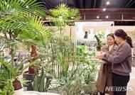 쾌적한 실내 환경 위한 정화식물 인기
