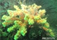 다도해국립공원 특별보호구역 4곳 신규 지정
