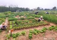 [수원소식] 시민농장 텃밭체험 참여자 모집 등