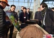 제천 의림지뜰 솔방죽에 20만그루 유채꽃밭 만든다