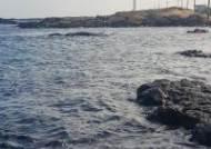 제주 해안가서 참돌고래 사체 발견