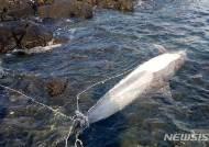 제주 구좌읍 해안가서 참돌고래 사체 발견