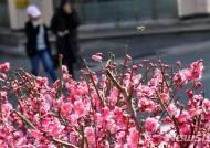 부산 최저기온 영하 1.4도…반짝 추위 10일까지 지속