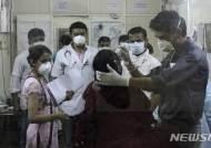 인도서 신종플루로 312명 사망