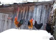 [원추 오늘의운세]닭띠 ㅅ·ㅇ·ㅊ 성씨, 북동쪽 길하다