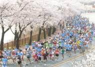 '천년고도 벚꽃 레이스', 제28회 경주벚꽃마라톤대회 참가 접수