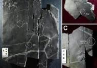 진주교대, 소형 육식 공룡 발바닥 피부 흔적 화석 세계 최초 발견