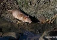 [원추 오늘의운세]쥐띠 미혼자, 늦은시간 외출 삼갈 것