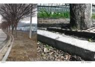 보은 삼년산성 진입로 느티나무 가로수 '퇴출' 논란