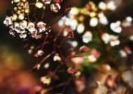 봄소식 전하는 냉이꽃
