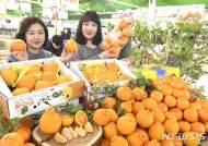 농협유통, 한라봉-천혜향 판매