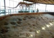 세계자연유산 석학들 해남 우항리 공룡화석지 현장 답사
