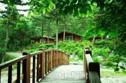 치열한 '국립자연휴양림' 여름휴가시즌 추첨 6월 5~11일 실시