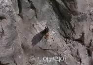 동해 천곡천연동굴 입구서 멸종위기종 '황금박쥐' 깜짝 출현