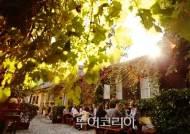 세계축제로 즐기는 가을풍미①...와인향 그윽한 '비엔나'
