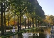 [내일은 늦으리] 가을 도화지 서울 숲 '단풍절정'