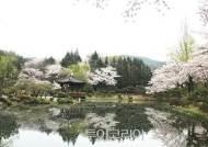 천년고도 경주의 '시크릿 벚꽃 명소'따라 봄여행!