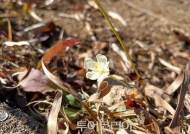 주왕산국립공원, 특정식물 조사 중 신규 생물종 '물매화' 발견