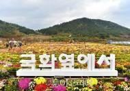 [주말여행] 오감만족 '고창국화축제'…향에 취하GO 즐거움에 취하GO