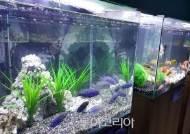 민물고기생태체험관으로 신비한 열대어 구경가요!