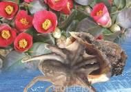 서천 동백꽃주꾸미 축제로 봄여행 즐겨볼까!...한 달여 앞으로 '성큼'