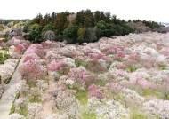 '이바라키 봄여행'으로 핑크빛 낭만 꽃피워볼까!