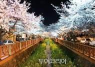 경남의 봄을 걷다! 꽃길 따라 펼쳐지는 그림 같은 풍경에 힐링①..창원
