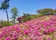 꽃처럼 진 '논개' 발자취 따라 진주 봄여행