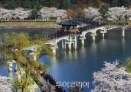 노랑·분홍·하양 물결 일렁이는 봄!... 경북으로 떠나는 꽃길 여행