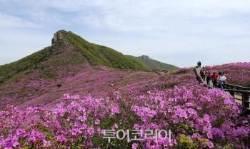 가슴 속까지 진분홍빛으로 물들겠네! 천상화원 산청·합천 '황매산 철쭉'