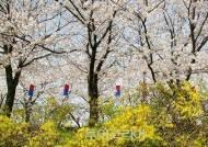 에취~! 봄나들이 불청객 '꽃가루 알레르기', '꽃가루 달력'으로 예방하세요!