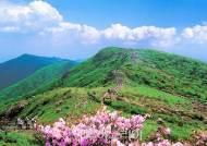 천상의 화원 '영주 소백산'...꽃놀이 즐기기 좋은 소백산 탐방 코스 3곳