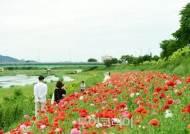 봄꽃 향기에 취하다! '장성 황룡강 (洪)길동무 꽃길 축제'