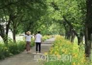 7월 초여름, 노란 원추리 꽃 따라 구례 여행!
