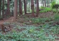 여름엔 초록 숲 힐링이 좋다! '익산 성당 두동마을 편백나무 숲'으로
