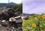 완도 항동마을 공고지의 대변신, 쓰레기장에서 해바라기 꽃밭으로!